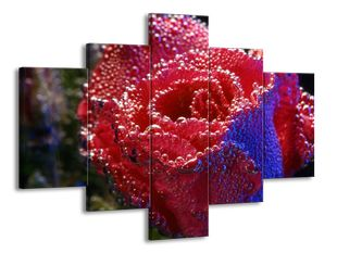 Perly na růži