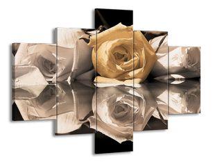 Odraz růže