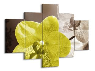 Žlutá bílá orchidej