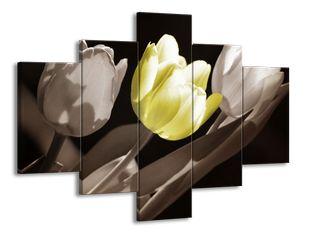 Radost žlutého tulipánu