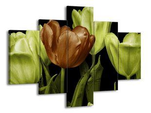 Hnědý tulipán