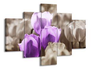Fialové tulipány na louce