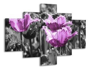 Střapané tulipány ve fialové