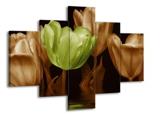 Zelený tulipán