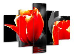 Rudá vášeň tulipánů