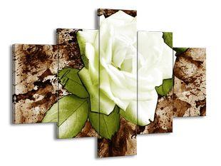 Růže v bílém