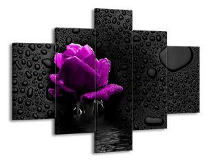 Fialová růže ve vodě