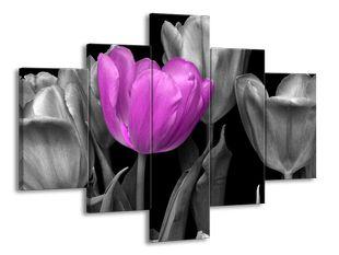Fialový tulipán