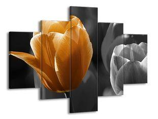 Odkvetlé lístky tulipánu