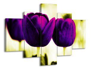 Tmavě fialové tulipány