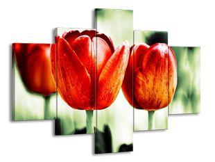 Vybarvené tulipány