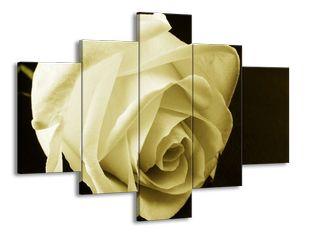 Sametová růže