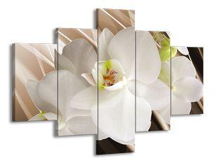 Čistota orchideje