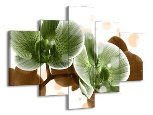 Zelenkavé orchideje