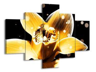 Žlutá květina v rose