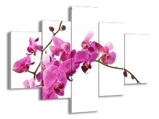 Krása růžových orchidejí
