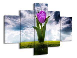 Tulipán na louce