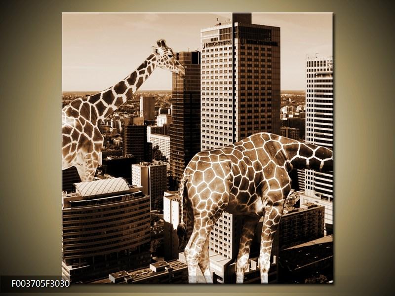 Žirafy ve velkoměstě