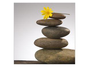 Kvítek na kamenech