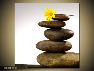 Žluté kvítko na kamenech
