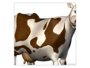 Spokojená kráva