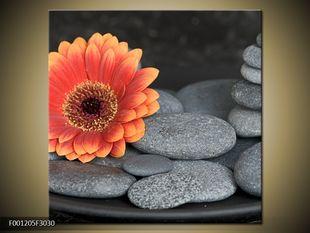 Oranžový kvítek na kamenech