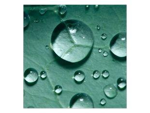 Kapičky vody na listě