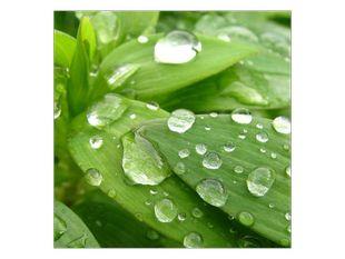 Voda na listu