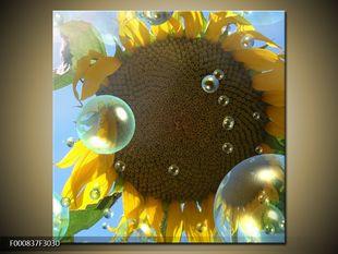 Slunečnice a kapky vody