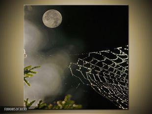 Pavučina v kapkách rosy