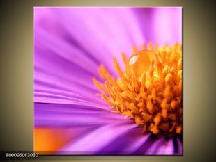 Kapka vody na květině