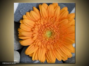 Oranžová květina na kamení