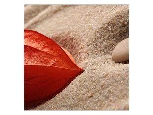Květina v písku