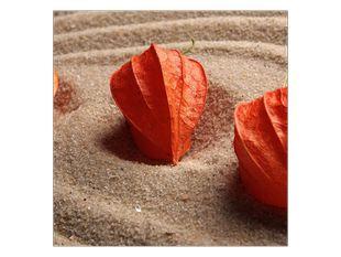 Květiny v písku