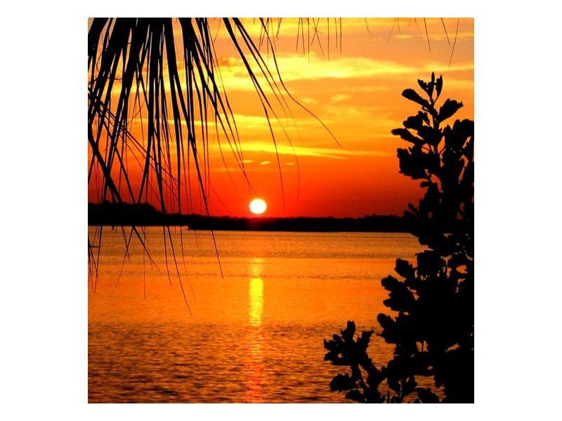 Palmy při západu slunce