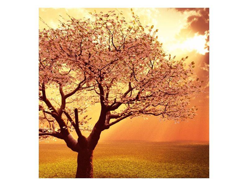 Kvetoucí růžový strom