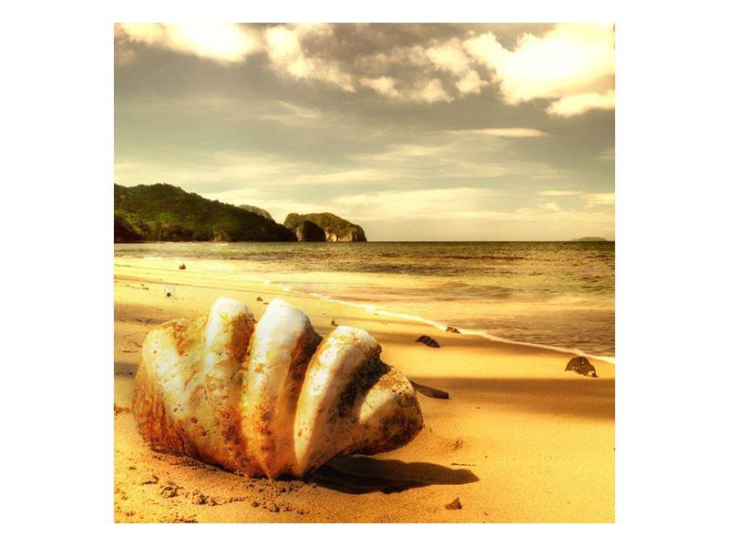 Slunečné pobřeží