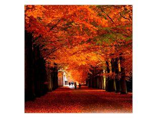 Procházka mezi stromy