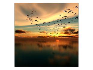 Hejno ptáků nad řekou