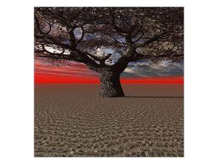 Strom a savana