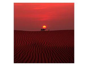 Velbloudi a poušť