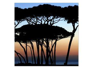 Siluety stromů