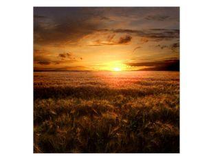 Západ slunce na poli