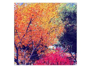 Podzimní listí stromů