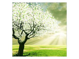 Paprsky slunce a strom