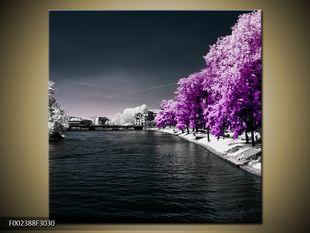 Stromy u řeky