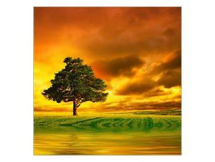 Strom uprostřed pole