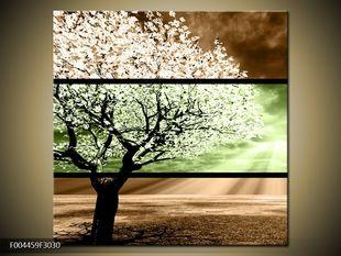 Bílý strom dvoubarevně