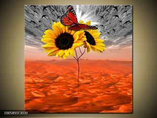 Motýl a slunečnice
