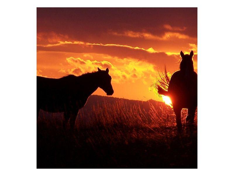Kůň při západu slunce 3